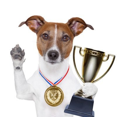 dog-prize-competition