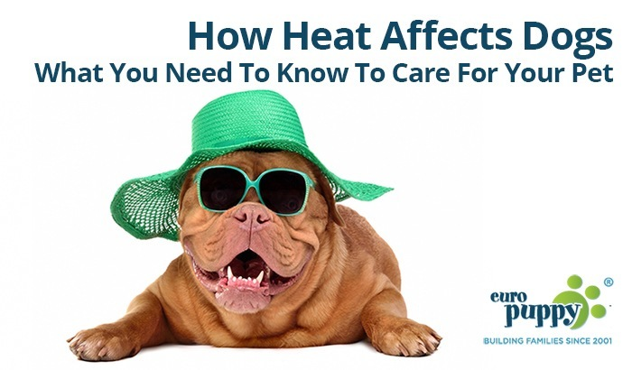 what affects heat and the movement of heat Temperature changes everything what you need as air is warmed, the energy from the heat causes the molecules of air to move faster and farther apart how heating and cooling affects the movement of particles.