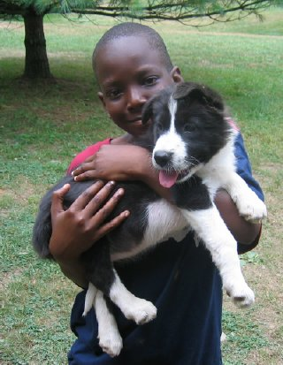 safe interaction between children and dogs