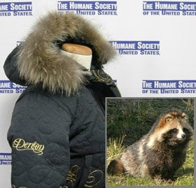 racoon dog-style jackets