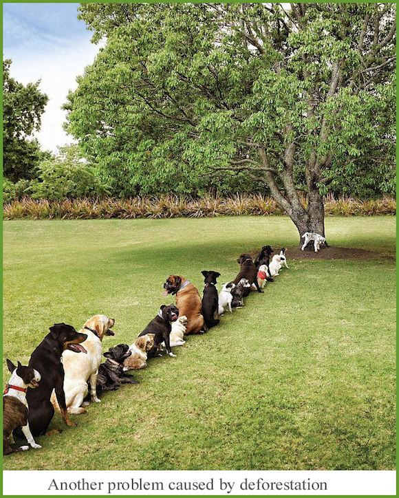 Dogs lining up