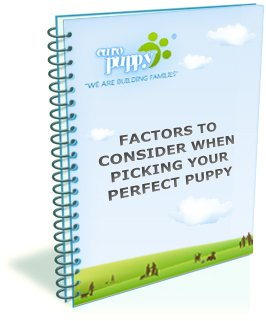 Factors to consider when picking your perfect puppy
