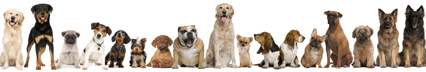 Dogs Puppies In Abu Dhabi United Arab Emirates Customer Reviews Euro Puppy