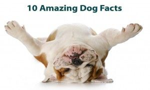 10-amazing-dog-facts-300x179