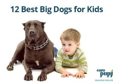 12-Best-Big-Dogs-for-Kids