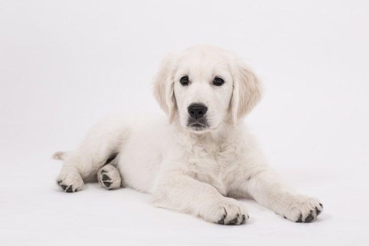 4 months old puppy