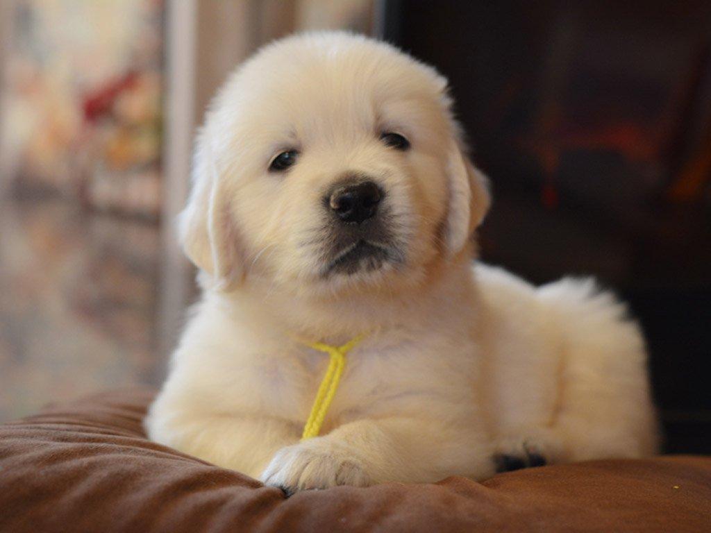 4 weeks old puppy