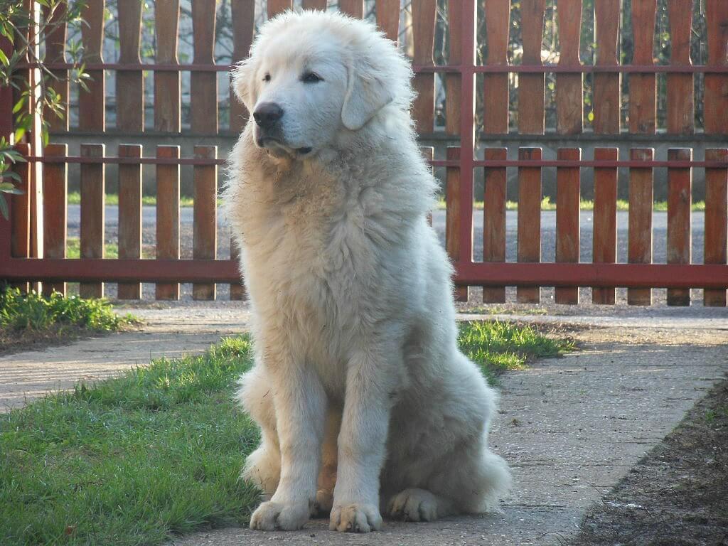puppy grows big