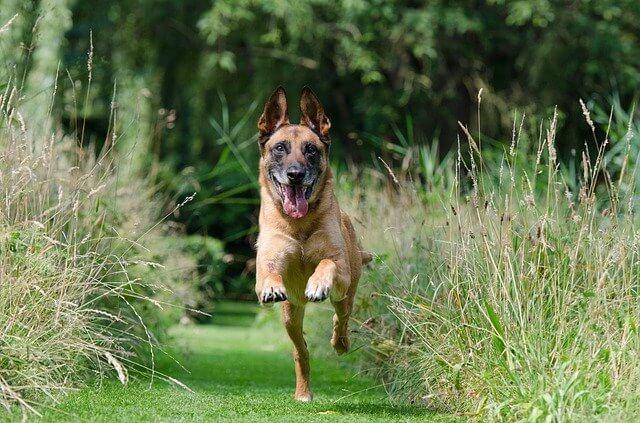 puppy dog exercise