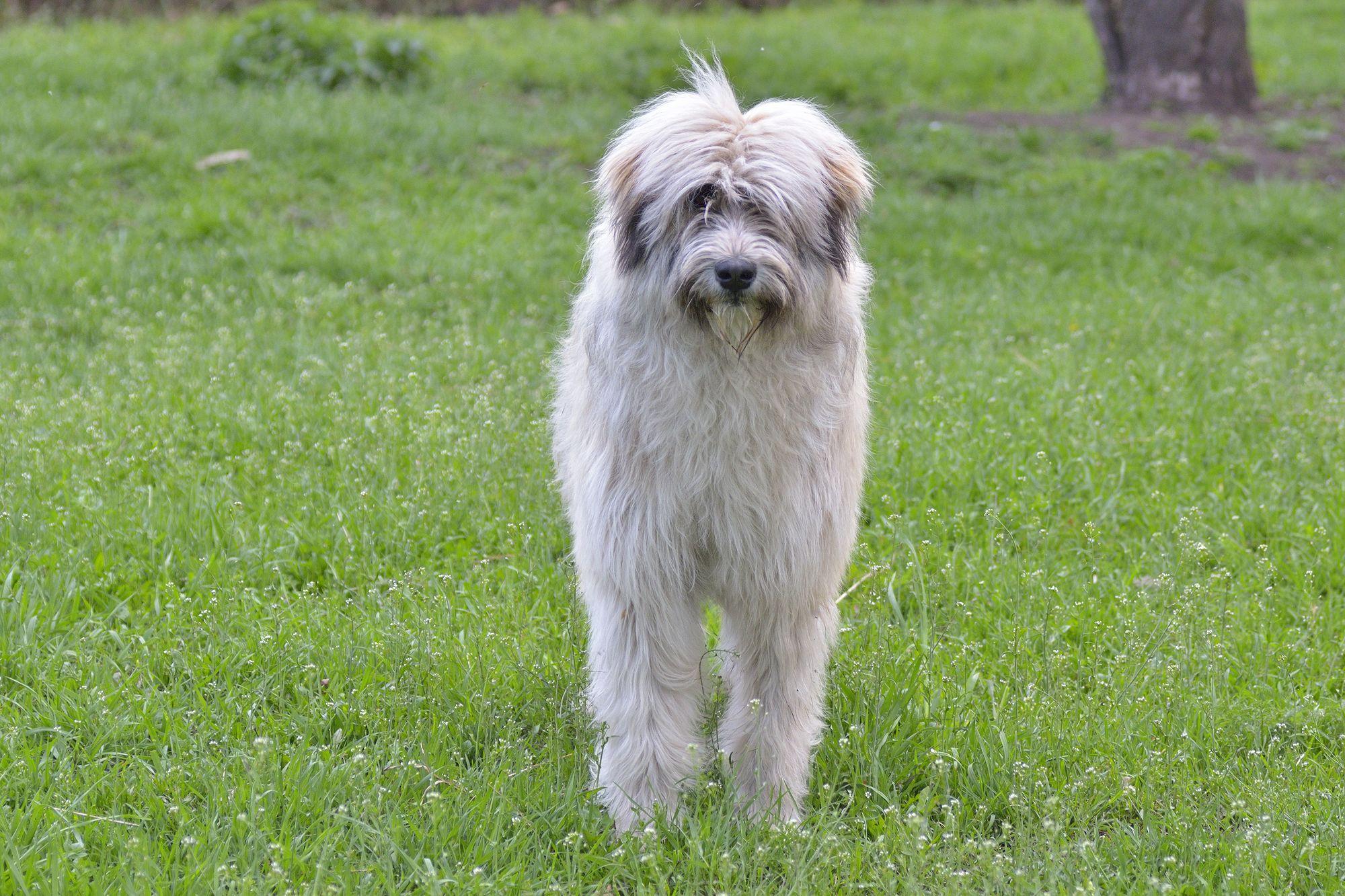 Romanian Dog Rescue Midlands