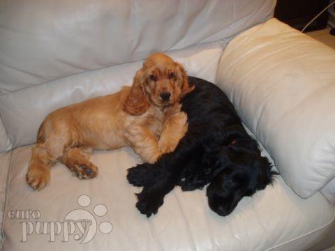 Dogs Puppies In Geneva Switzerland Customer Reviews Euro Puppy