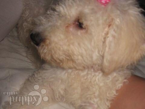 Jackson & Benson - Komondor Puppy - Calgary, 112 Old English Sheepdog Kent