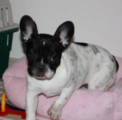 Lulu (aka Mignon)
