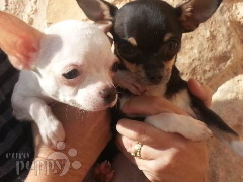 Cloe & Tito