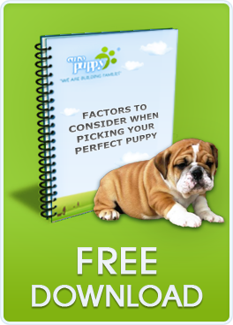 https://www.europuppy.com/euro_puppy_ebooks/factors-to-consider-free-download/