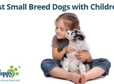 Best-Small-Breed-Dogs-with-Children