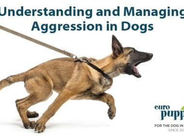 Blog-Understanding-and-Managing-Aggression-in-Dogs