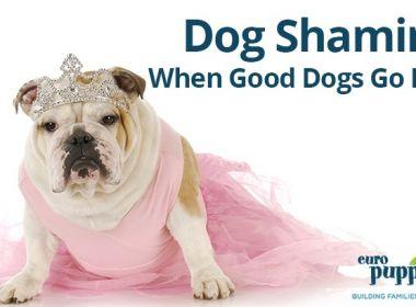 Dog-Shaming-When-Good-Dogs-Go-Bad