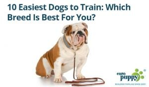 Easiest-Dogs-to-Train