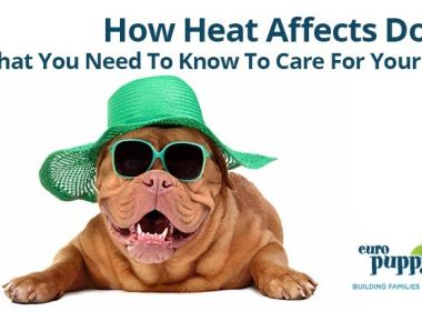 How-Heat-Affects-Dogs