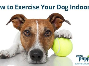 How-to-Exercise-Your-Dog-Indoors
