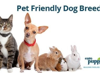 Pet-Friendly-Dog-Breeds