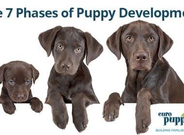 Phases-of-Puppy-Development
