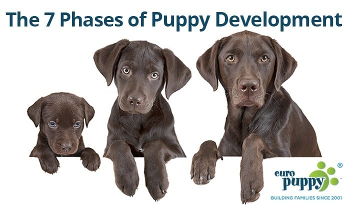 The 7 Phases Of Puppy Development