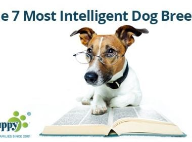 The-7-Most-Intelligent-Dog-Breeds