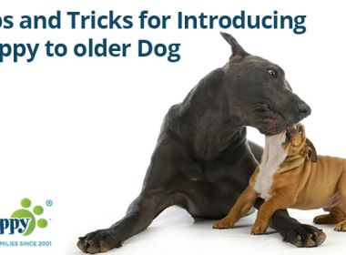 Tips-and-Tricks-for-Introducing-Puppy-to-older-Dog