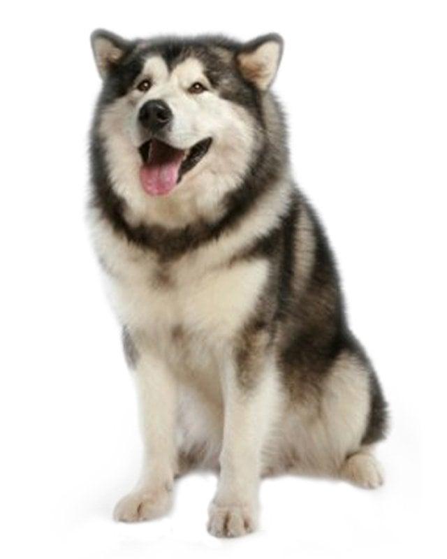 Big Dog Kennel Berlin Heights