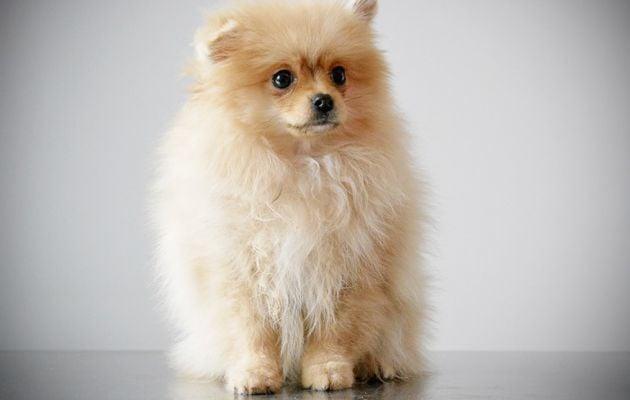 Best of Euro Puppy