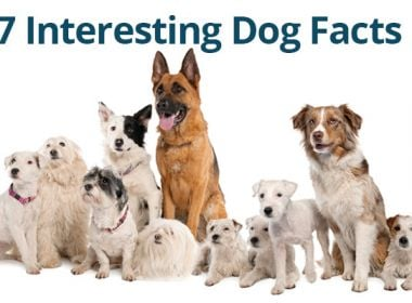 interesting-dog-facts1