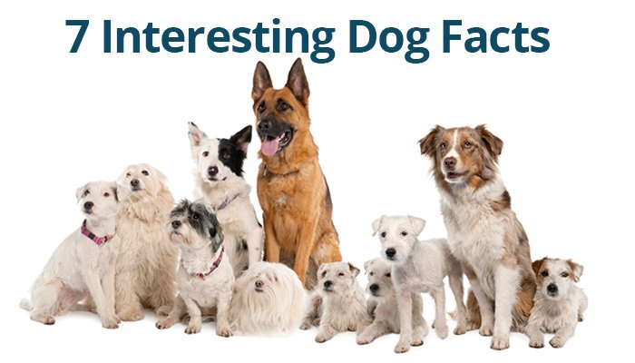 Dog facts Archives | Euro Puppy