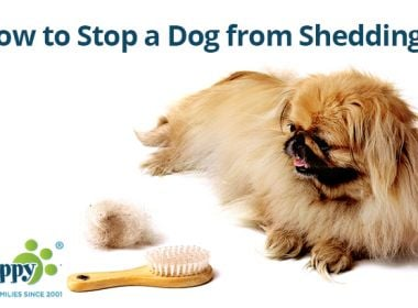 stop-a-dog-from-shedding