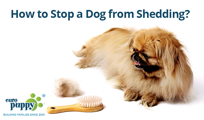 couch dog article large how while when should you on worry prevent shedding a black sheds to petcarerx excessive sitting labrador