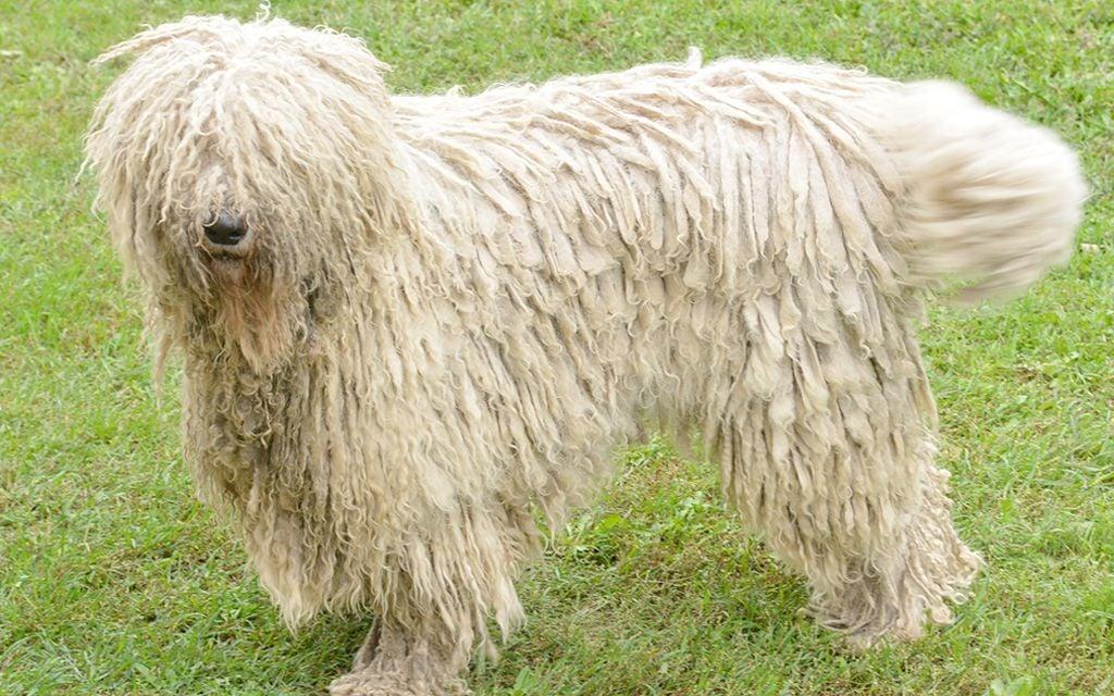 фото собак крупных лохматых пород дворовые парковки минске
