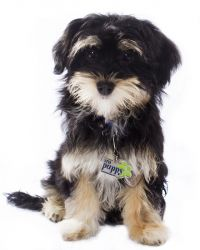 Puppies Dogs For Sale From Europe Puppy Finder Euro Puppy