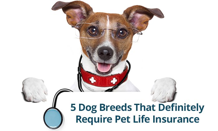 Top-5-Dog-Breeds-That-Definitely-Require-Pet-Life-Insurance